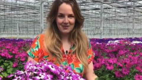 UK garden centres 'should re-open to stop millions of plants going to waste'