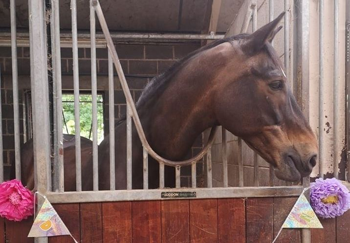 Lancashire Mounted Police horse Darwen, aged 21, will be going to live at the Horse Trust in Buckinghamshire, having served in Lancashire Police for a phenomenal 13 years