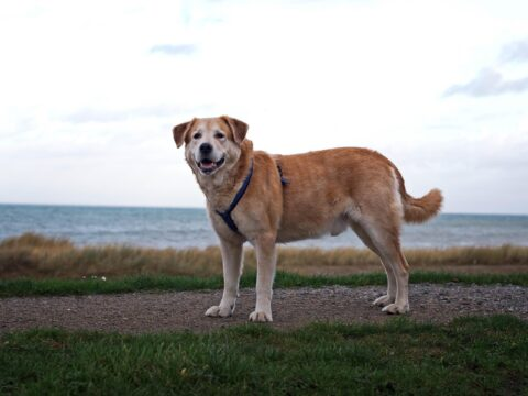 Rules that see £75 fines for dog fouling or entering banned areas renewed by Sefton Council