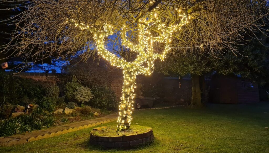 A tree in Southport lit up by IllumiDex UK Ltd