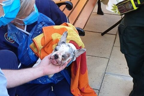 Firefighters rescue young French bulldog puppy in distress in Ainsdale