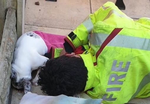 Merseyside Fire & Rescue came to the rescue of a French bulldog puppy in distress in Ainsdale in Southport