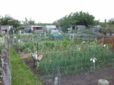 Desire for allotments boomed during pandemic as Sefton Council launches consultation
