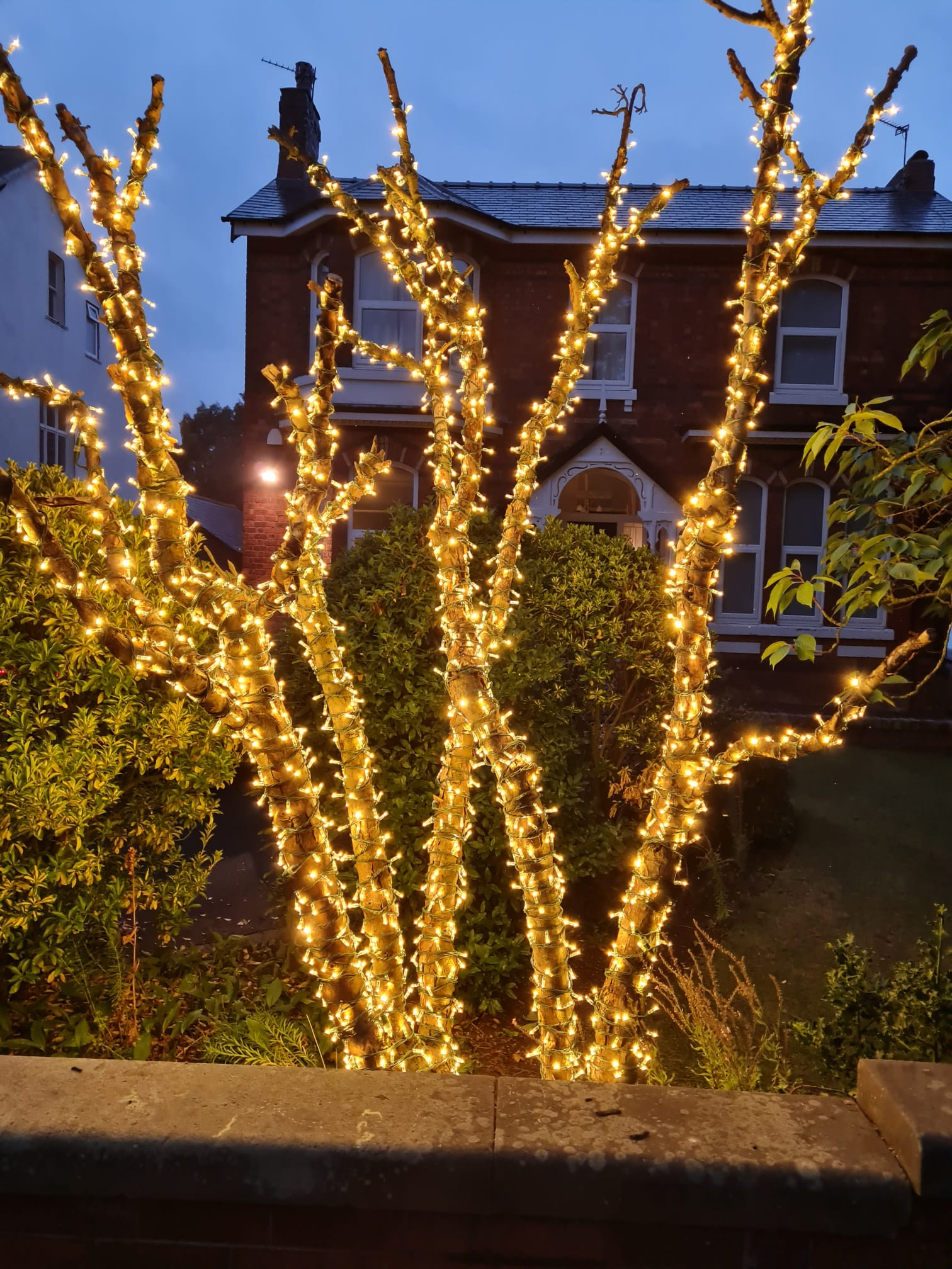 A tree on Shore Road in Ainsdale in Southport wrapped in lights by IllumiDex UK Ltd